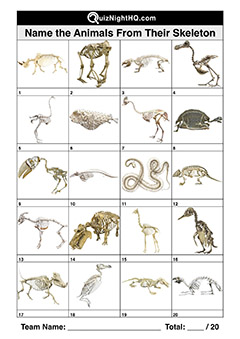 bone structures animal skeletons picture quiz