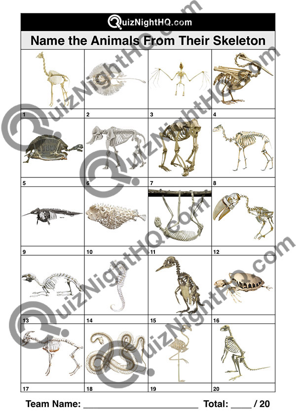 bone structures animal skeletons picture quiz kids