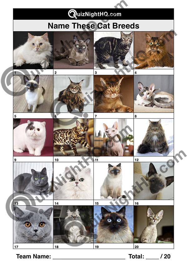 cat breeds animal trivia picture quiz round