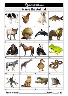 animals-001-q