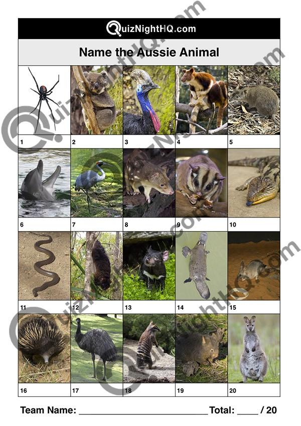 aussie-animals-001-q